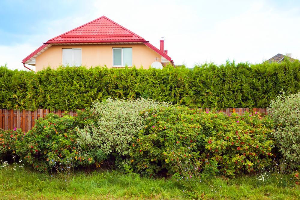 Pflanzen Als Sichtschutz Garten