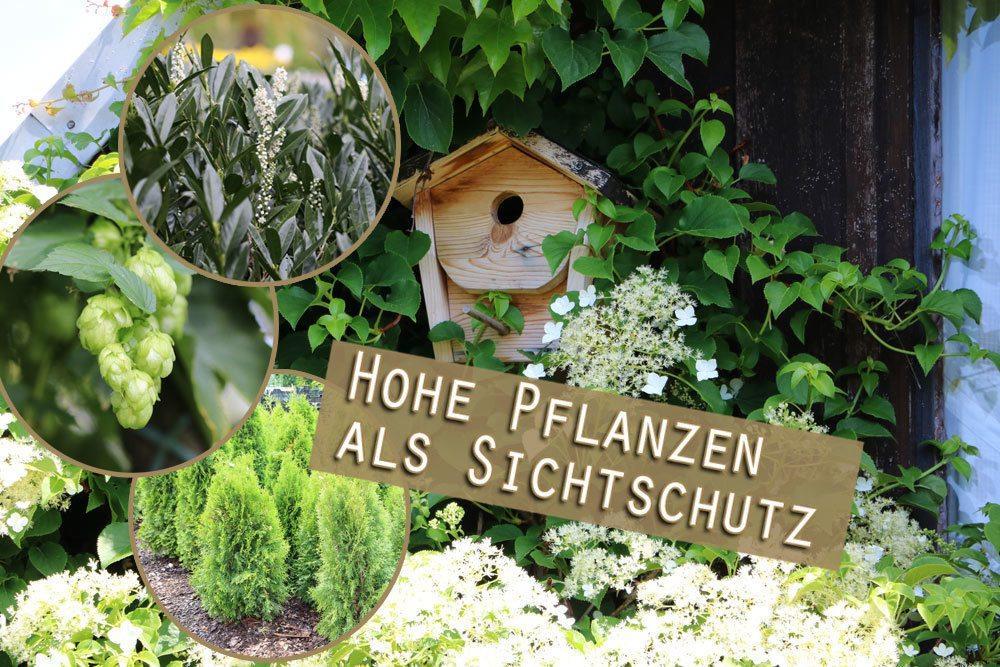Pflanzen Als Sichtschutz Im Garten