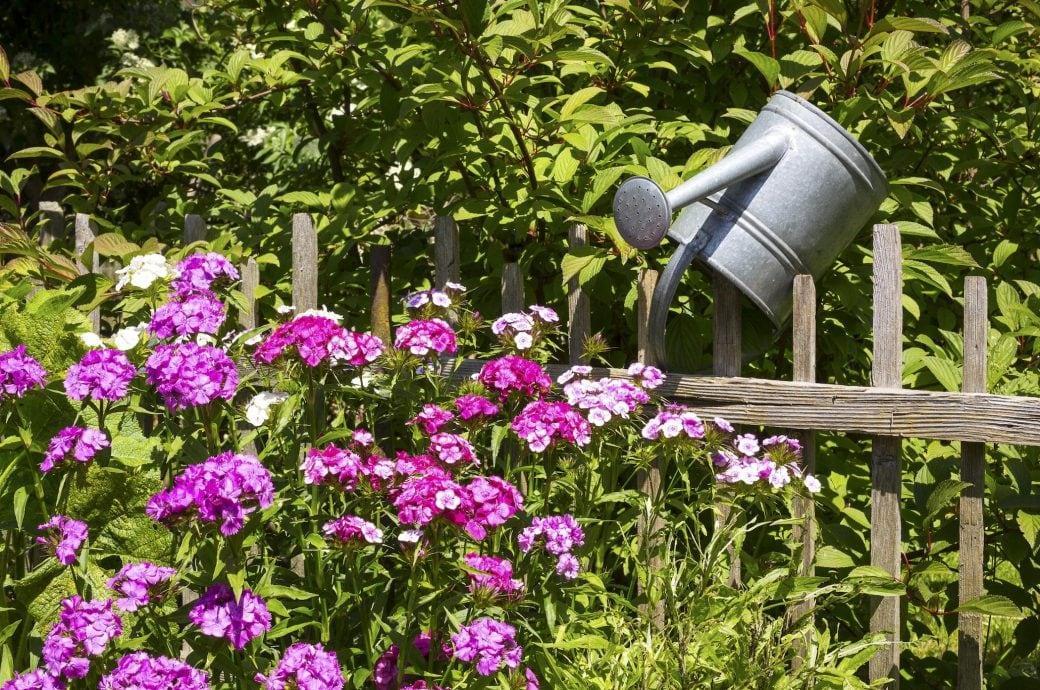 Pflanzen Für Garten