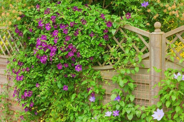 Pflanzen Für Gartenzaun