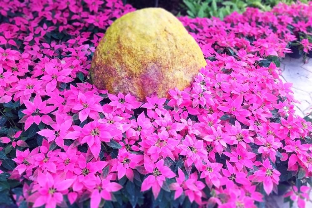 Pflanzen Für Steingarten Sonne