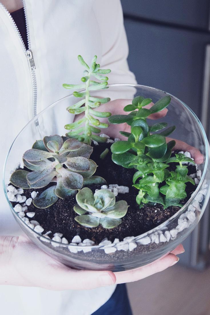 Pflanzen Garten Im Glas