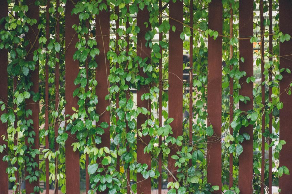 Pflanzen Garten Sichtschutz Ideen