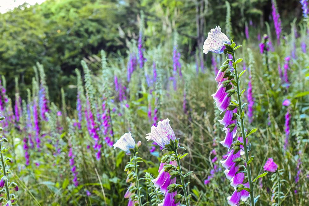 Pflanzen Halbschatten Garten
