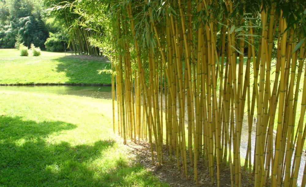 Pflanzen Natürlicher Sichtschutz Garten