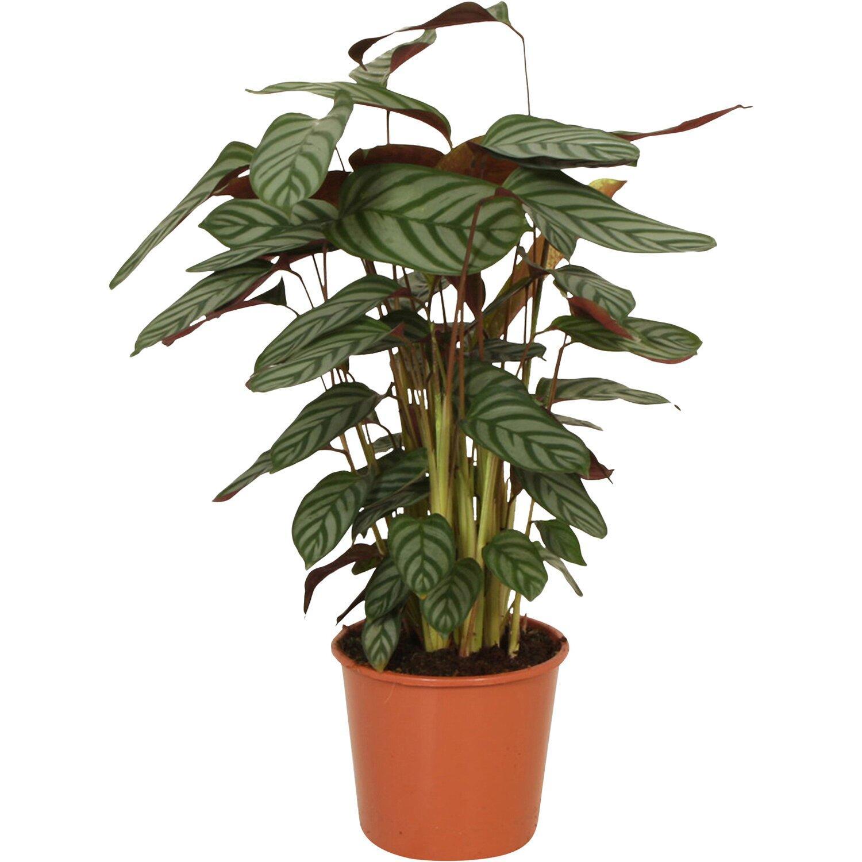 Pflanzen Online Kaufen Hamburg