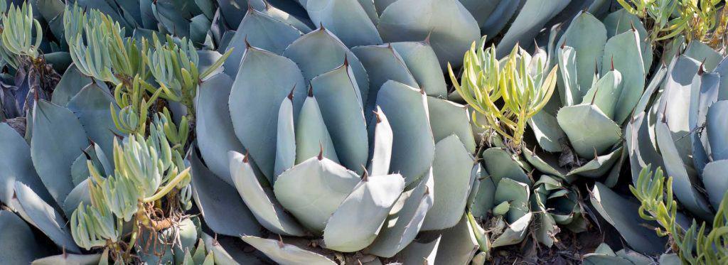 Pflanzen Online Kaufen