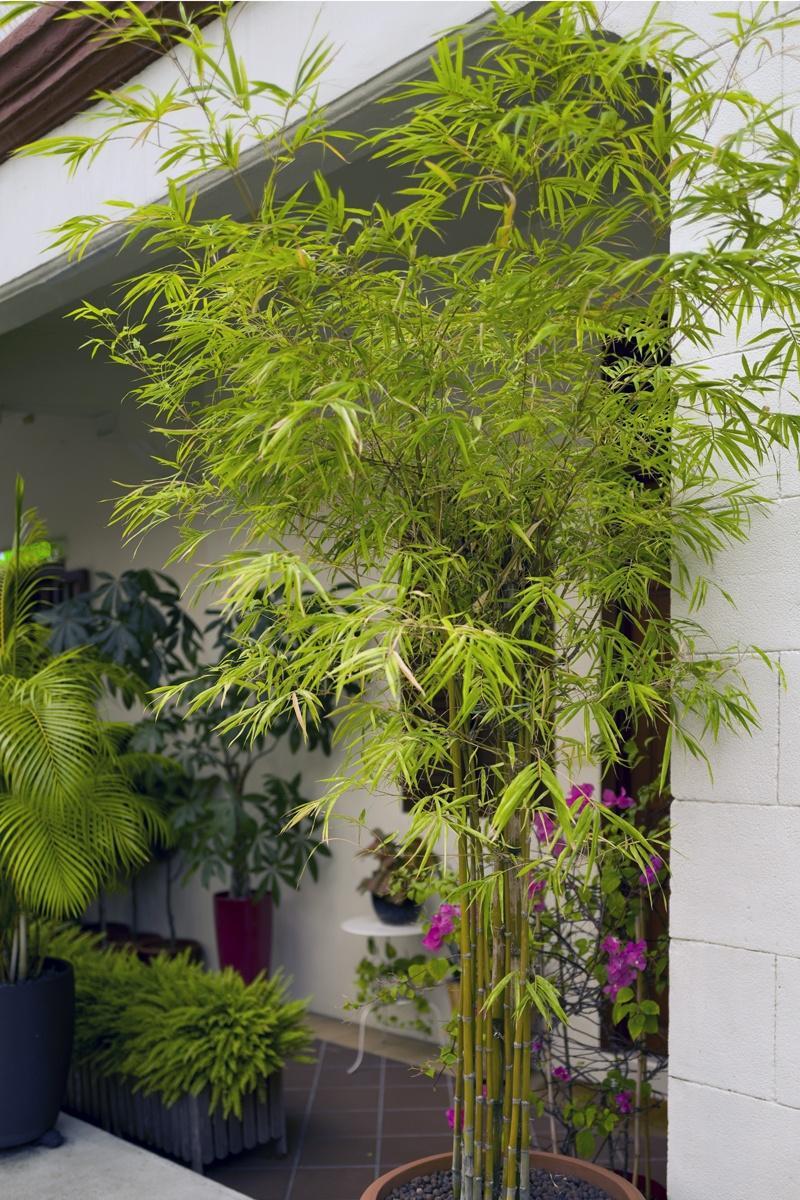 Pflanzen Sichtschutz Kübel