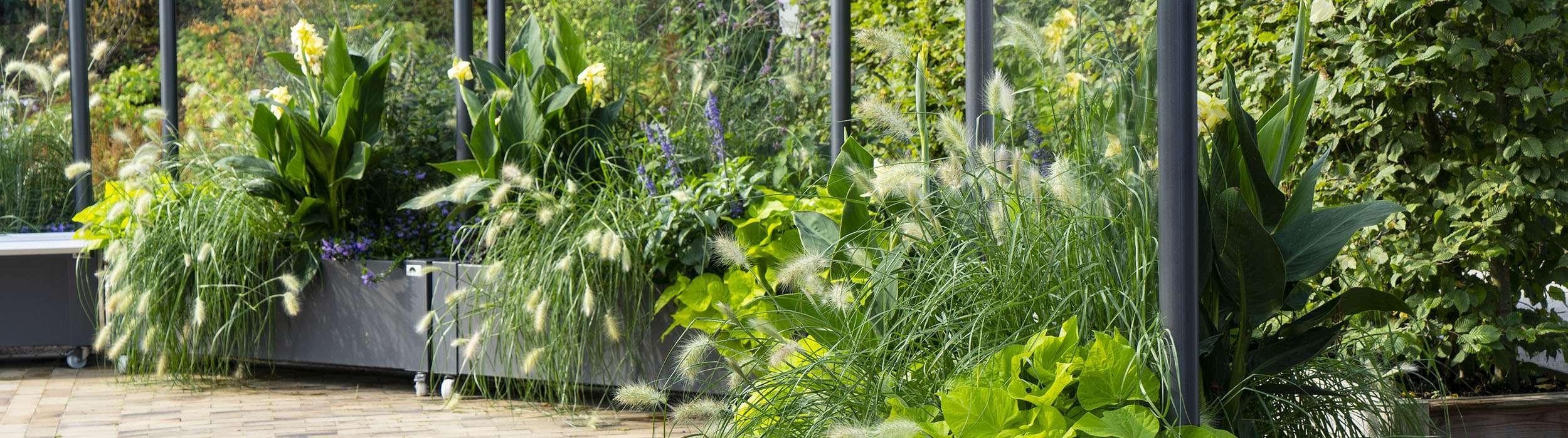 Pflanzen Sichtschutz Terrasse Ideen