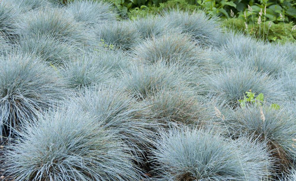 Pflanzen Steingarten Sonnig