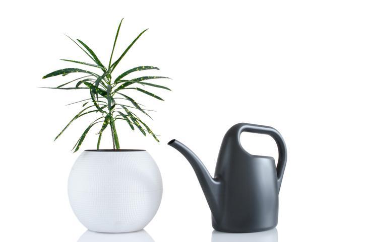 Pflanzenlampe Für Palmen