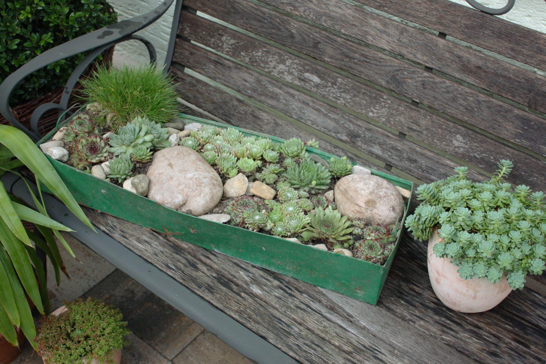 Pflegeleichte Gartenpflanzen Winterhart