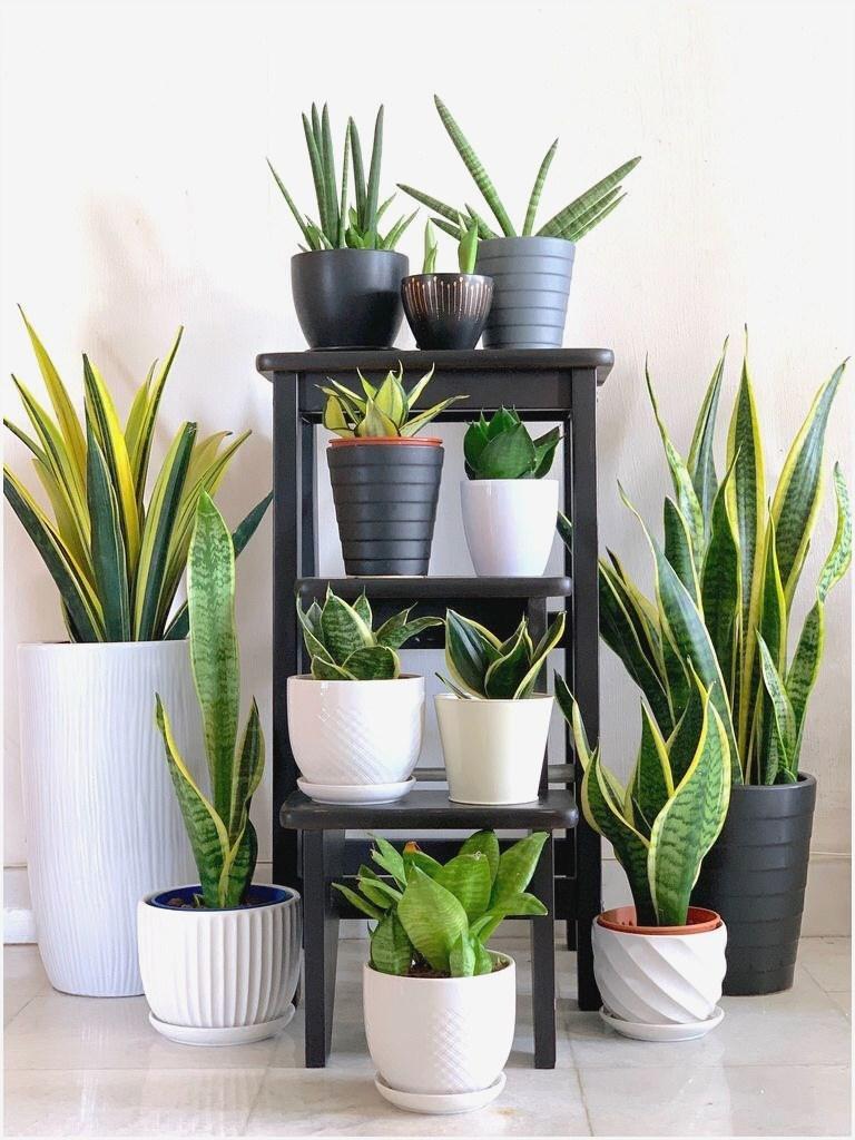 Pflegeleichte Grünpflanzen Wohnzimmer