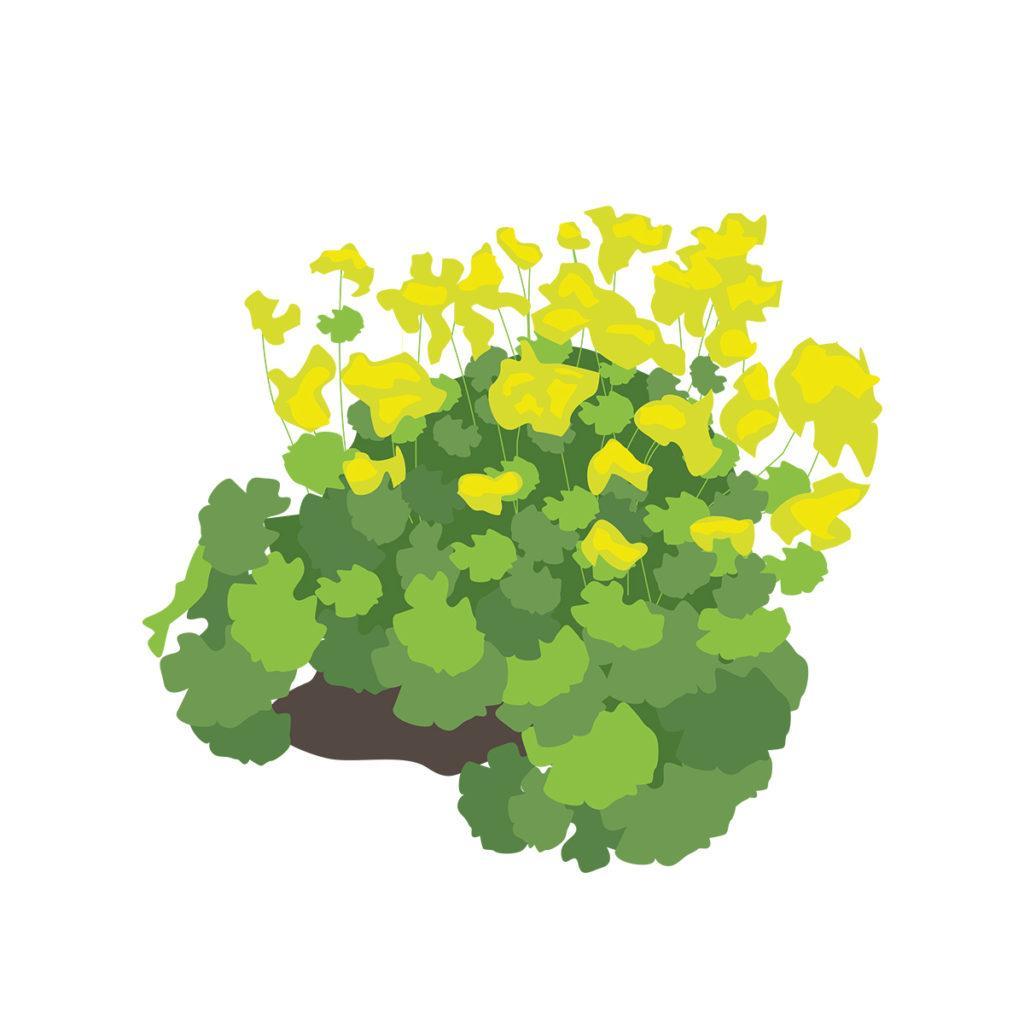 Pflegeleichte Pflanzen Für Den Garten