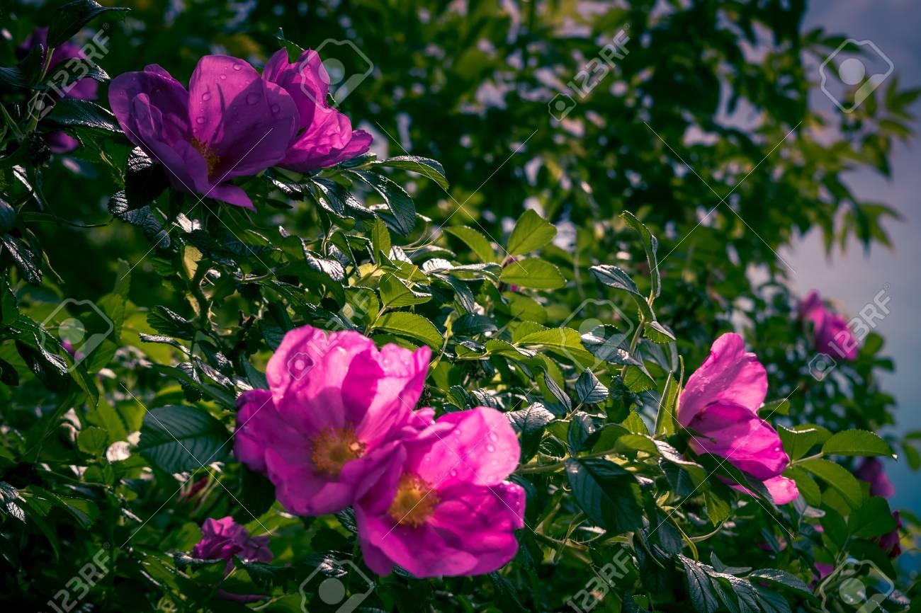Romantisch Wilder Garten