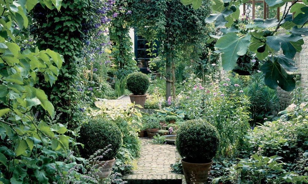 Schattengarten Pflanzen Für Schatten
