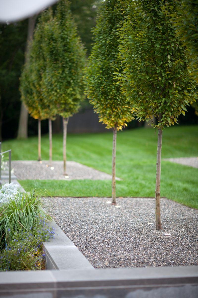 Schöne Moderne Moderne Bäume Für Den Garten