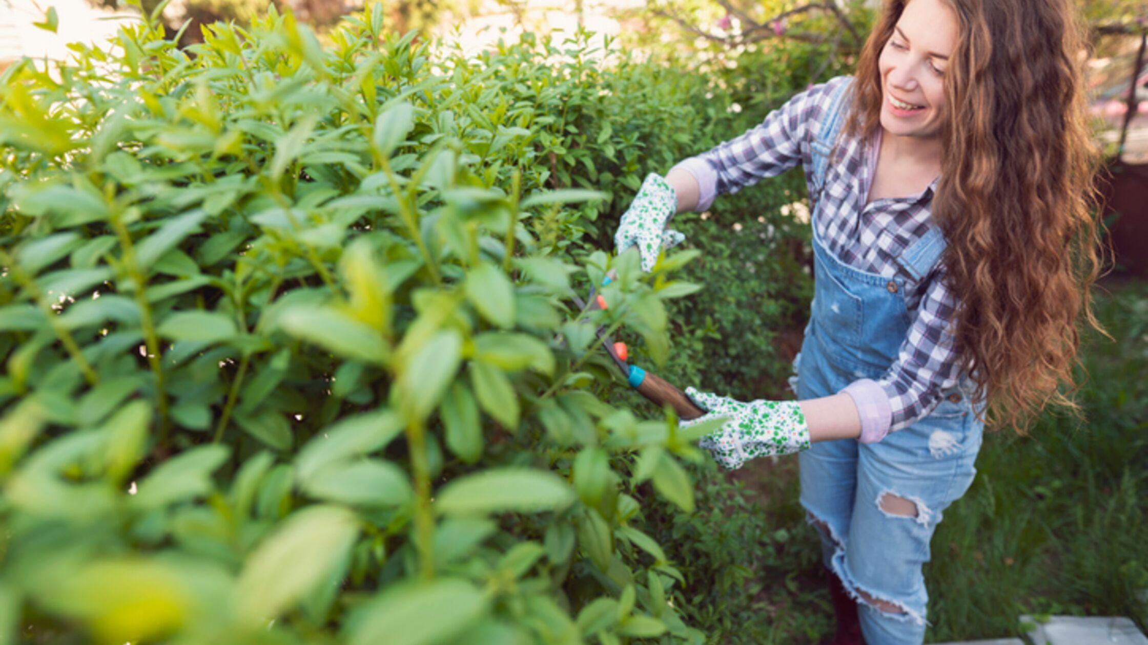 Sichtschutz Garten Ideen Pflanzen