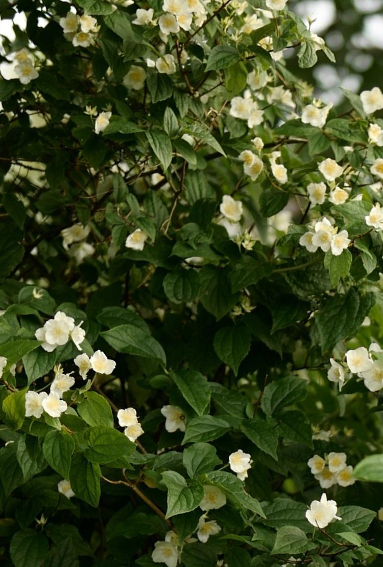 Sichtschutz Garten Pflanzen Schmal