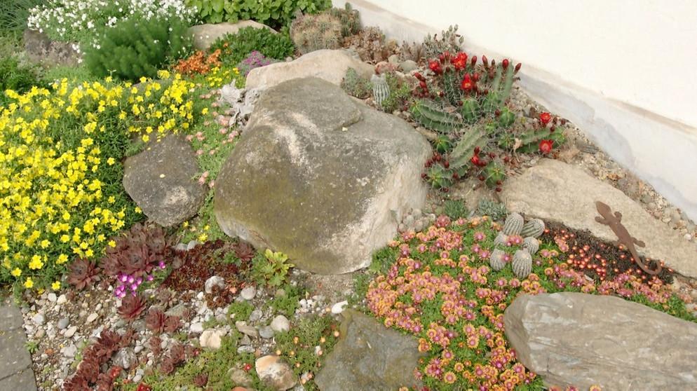 Steingarten Ideen Hauswurz