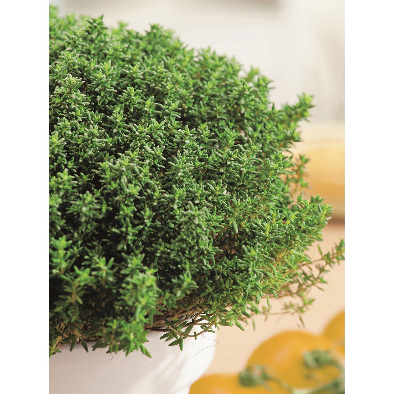 Steingarten Pflanzen Kaufen