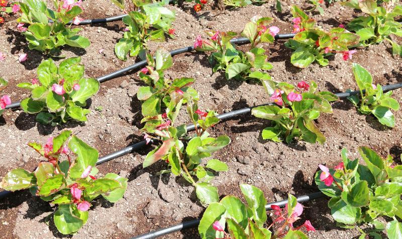 Tropfbewässerung Bewässerungssystem Garten