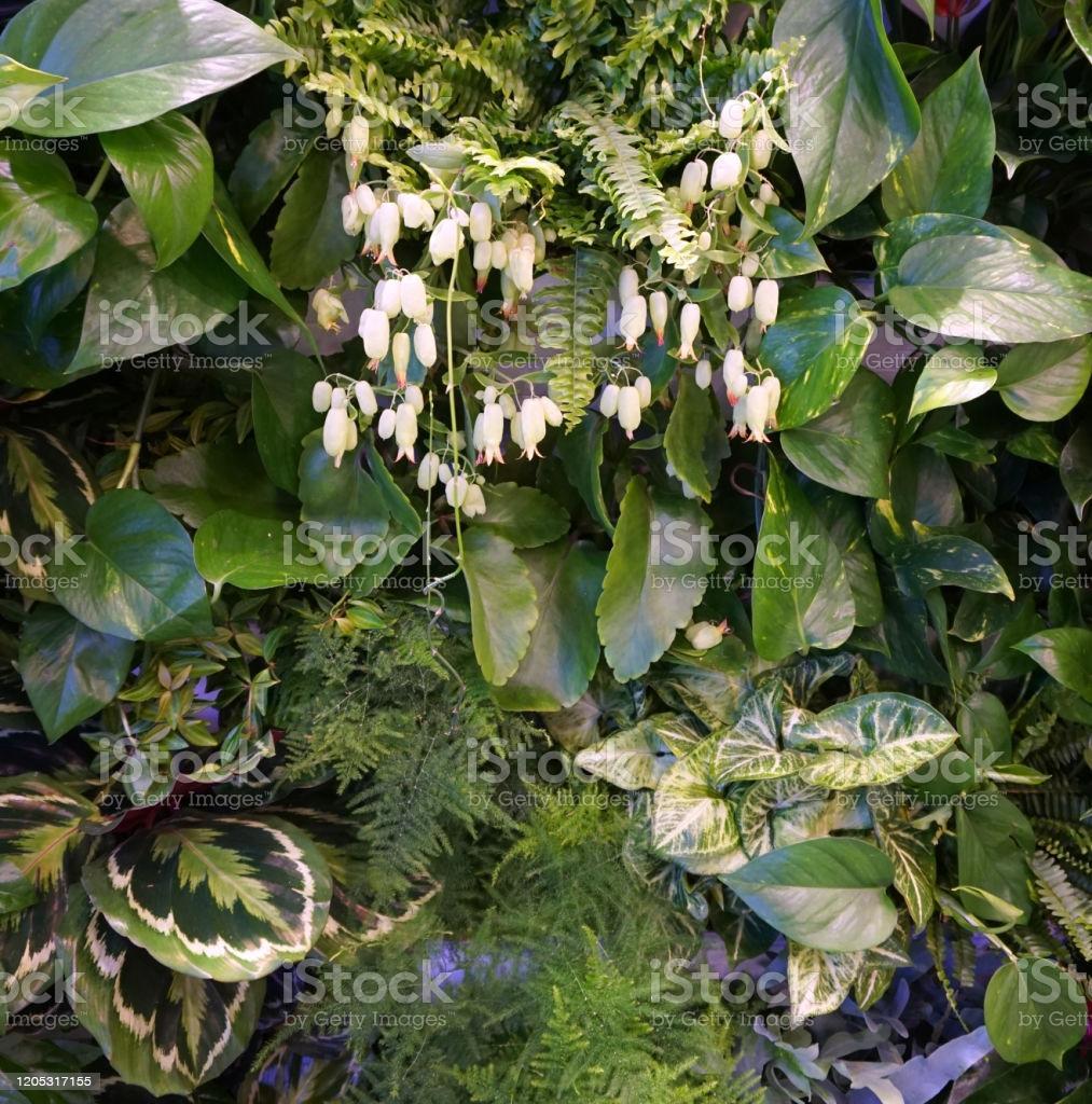 Tropische Pflanzen Für Den Garten