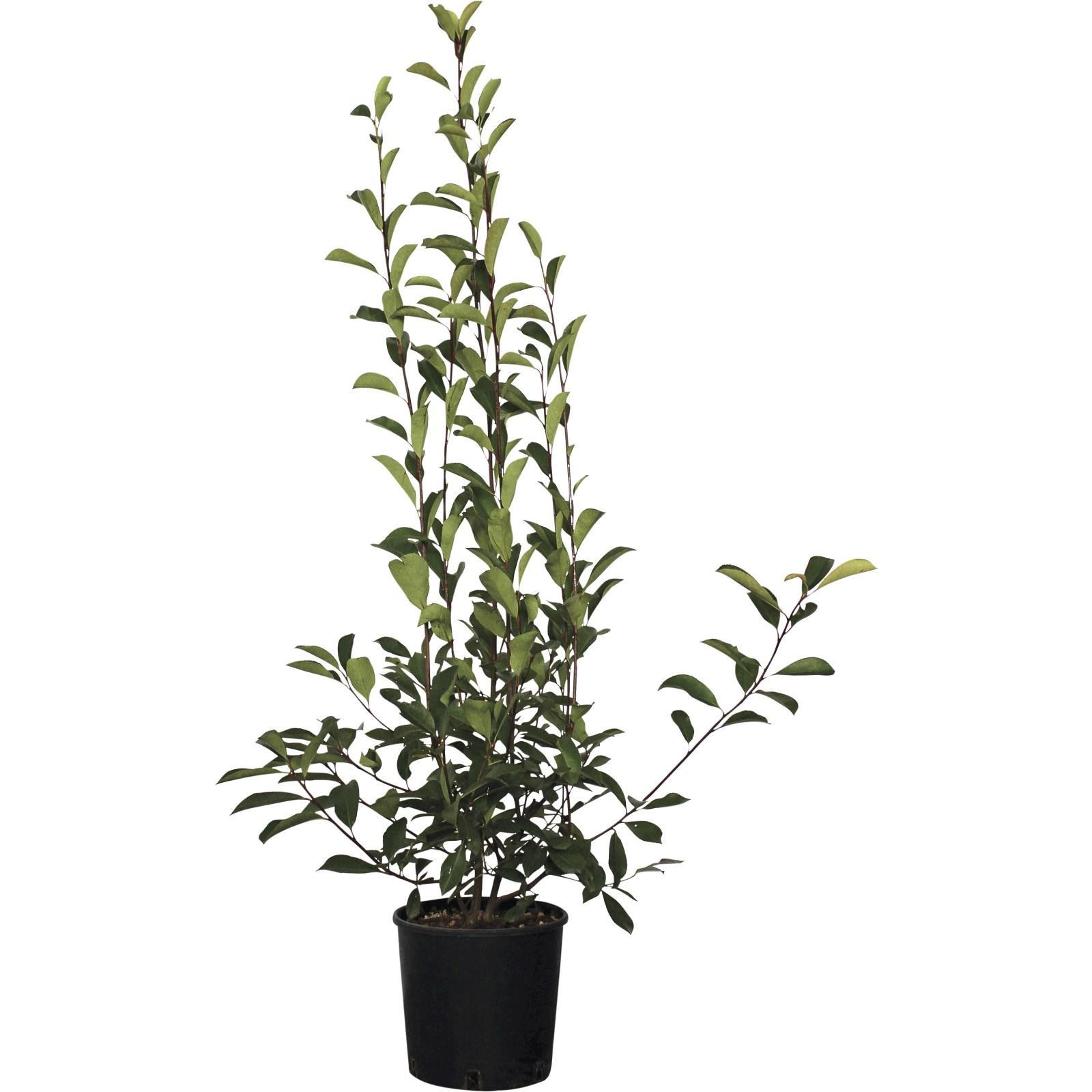 Verpiss Pflanze Kaufen Landi