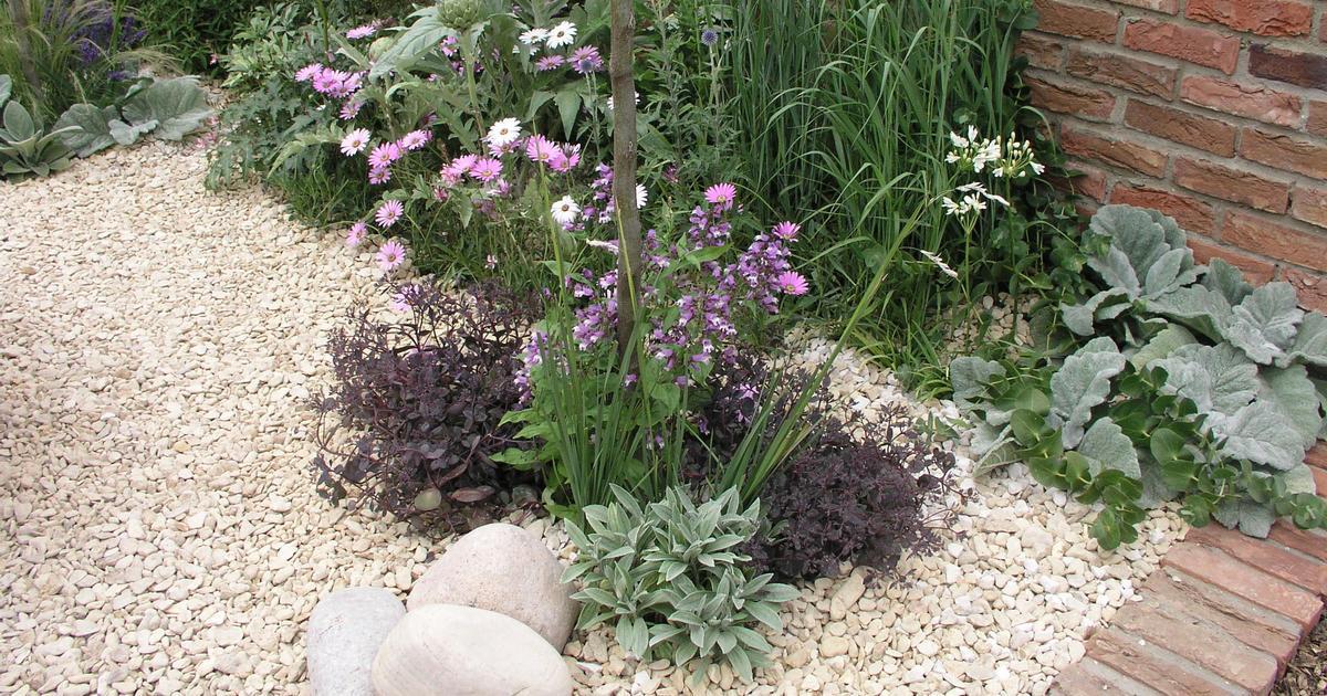 Vorgarten Pflanzen Für Kiesbeet