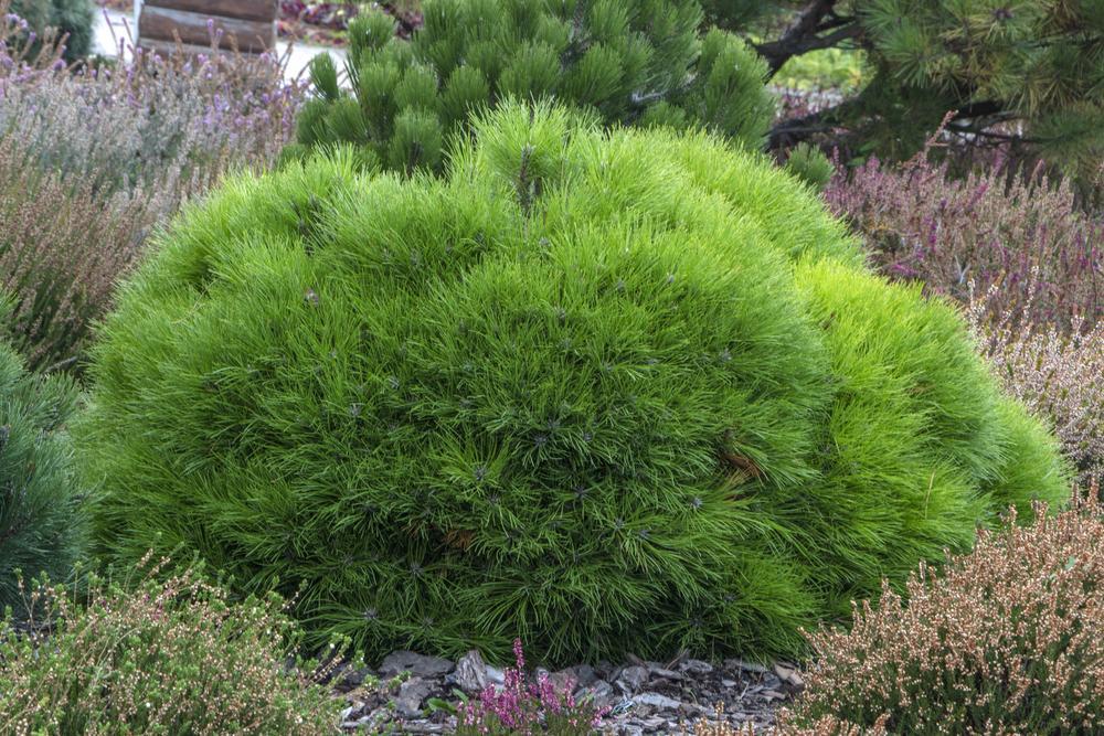 Vorgarten Pflanzen Im Topf