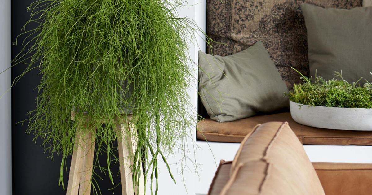 Wand Pflanzen Zimmer