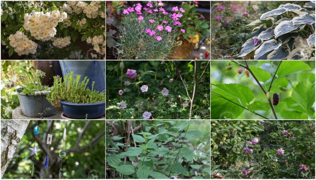 Wilder Garten Bilder