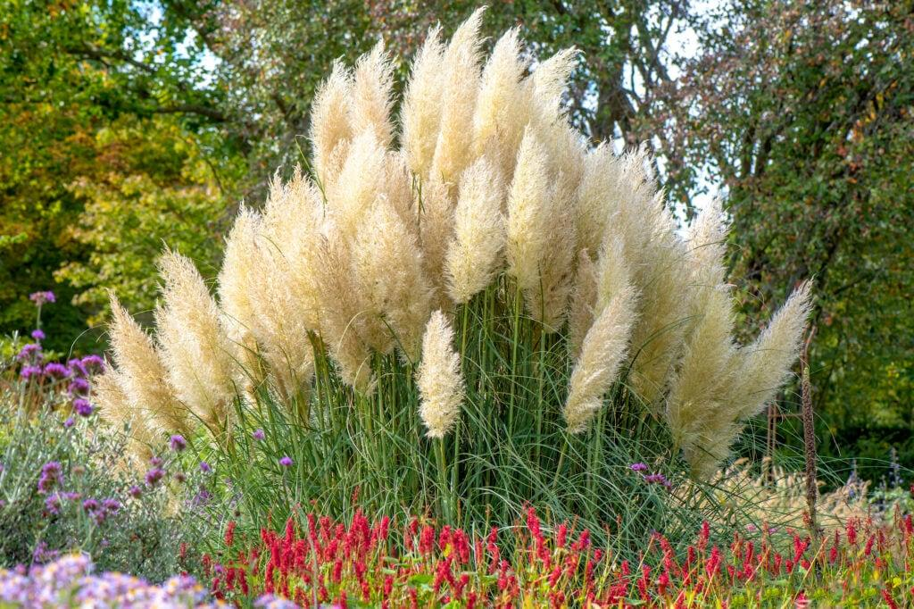Windschutz Garten Pflanzen