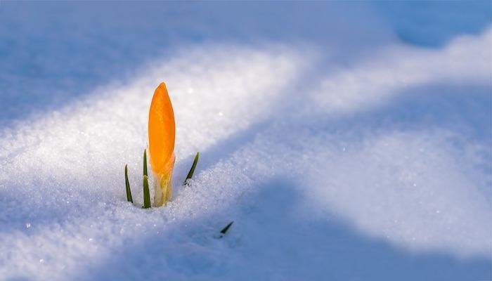 Winter Blumen Für Garten