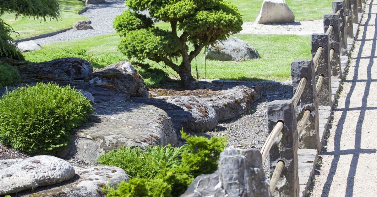 Winterhart Japanischer Garten Pflanzen