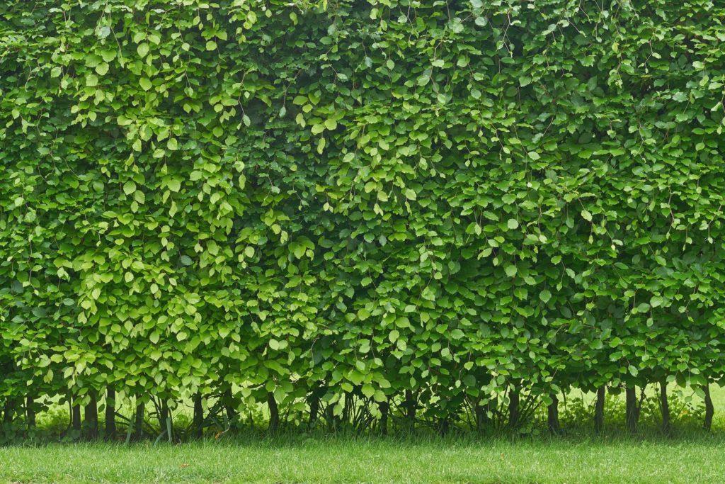 Winterhart Sichtschutz Terrasse Pflanzen
