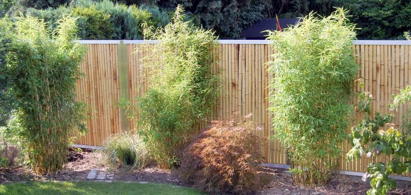 Winterharte Bambus Als Sichtschutz