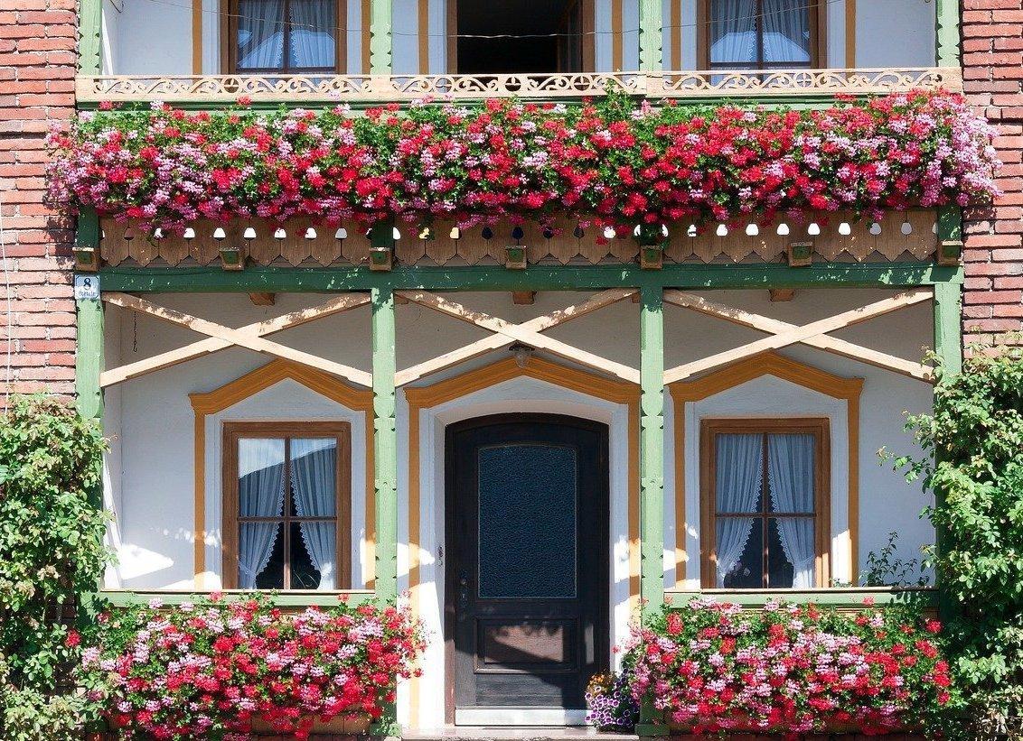 Winterharte Blühende Winterharte Pflanzen Balkonkasten