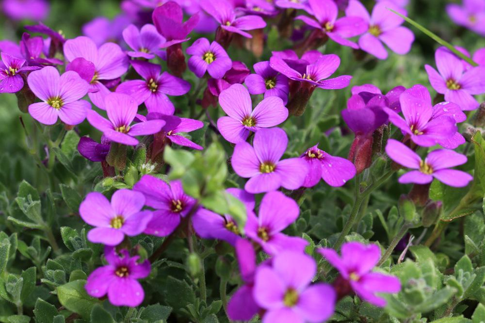 Winterharte Blumen Im Topf