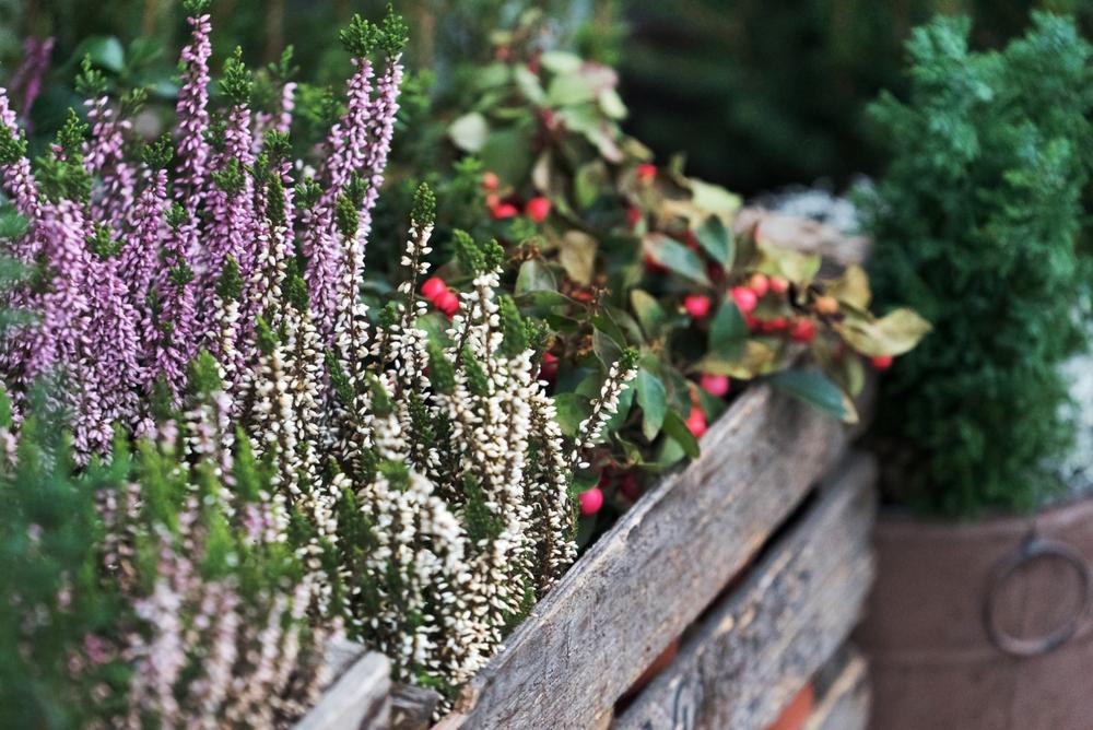 Winterharte Pflanzen Blumenkasten Bepflanzen Ganzjährig
