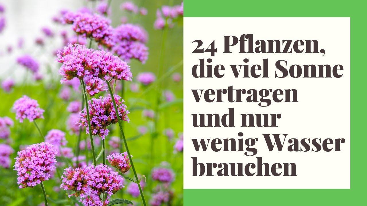Winterharte Pflanzen Gartenideen Pflanzsteine