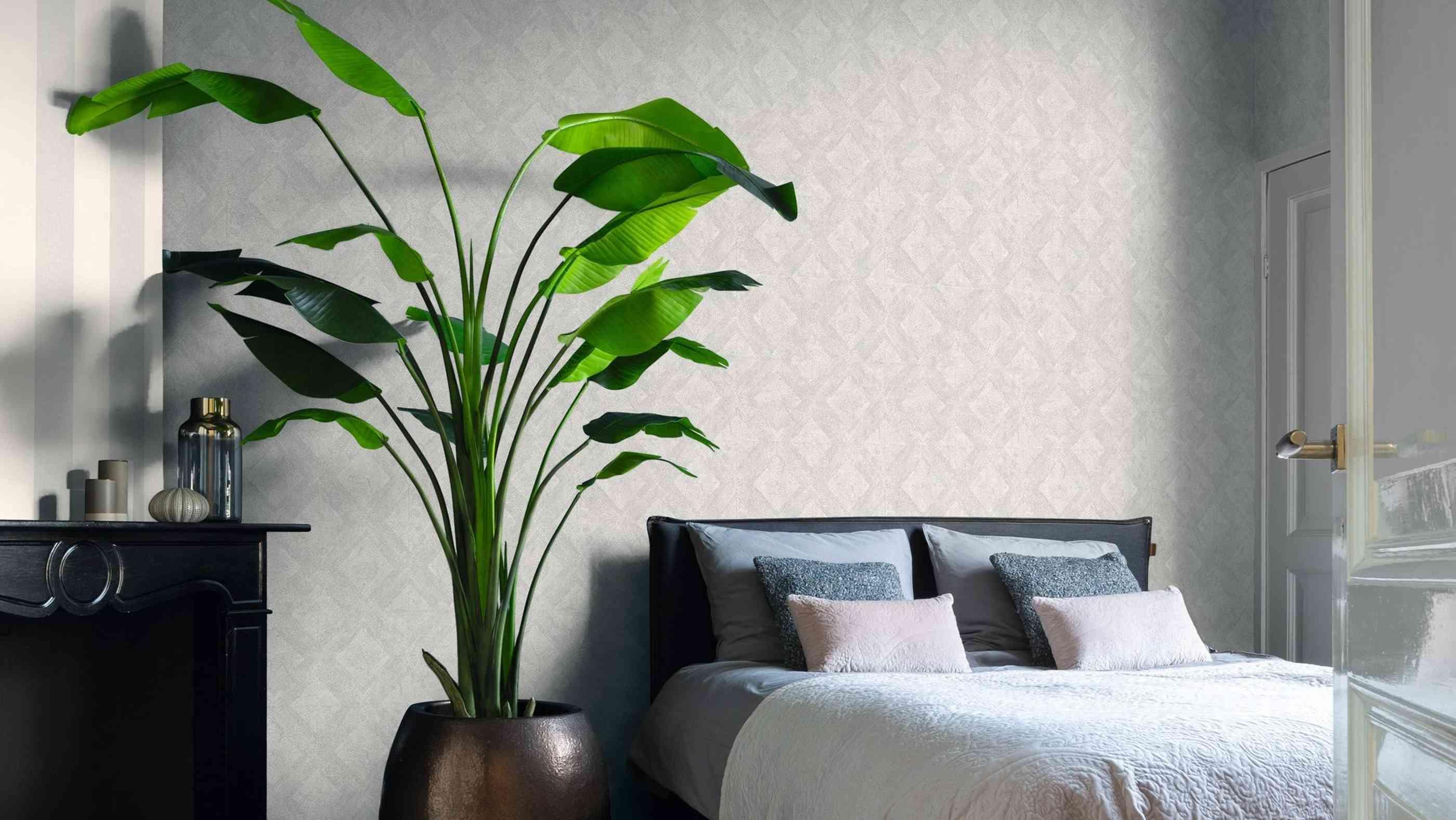 Wohnzimmer Exotische Zimmerpflanzen
