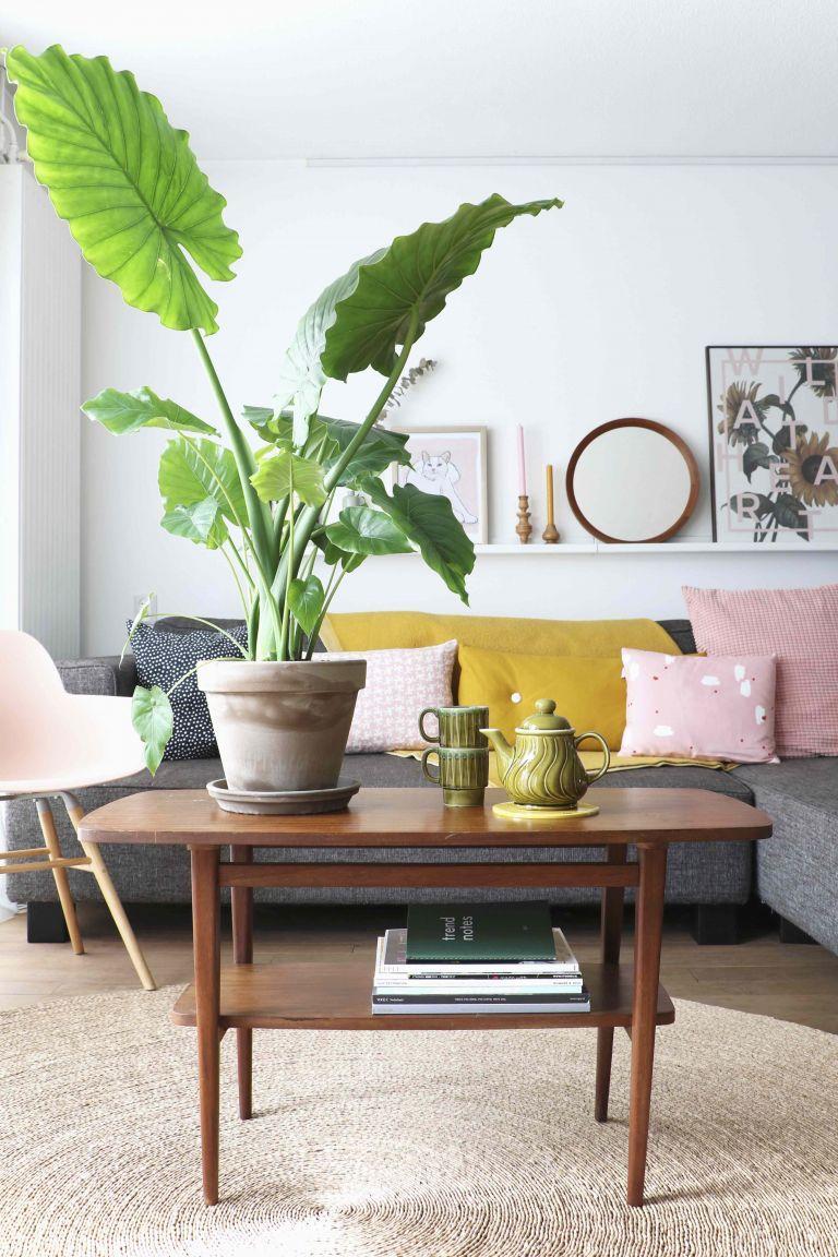 Zimmerpflanzen Grünpflanzen Wohnzimmer