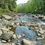 The Afon Mawddach in Coed y Brenin