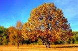 tree, park, autumn