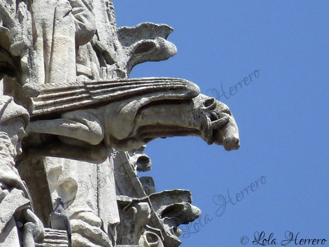 Gárgola Catedral Burgos (361)