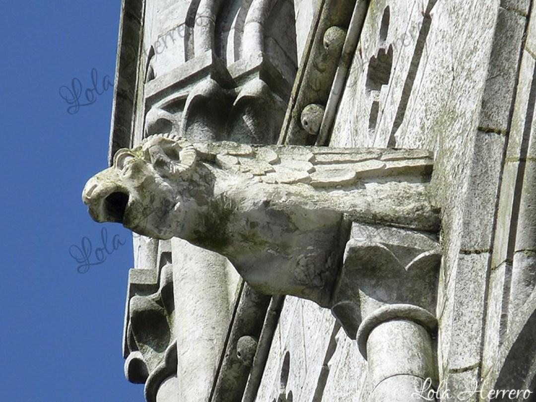 Gárgola Catedral Cork (Irlanda) (442)