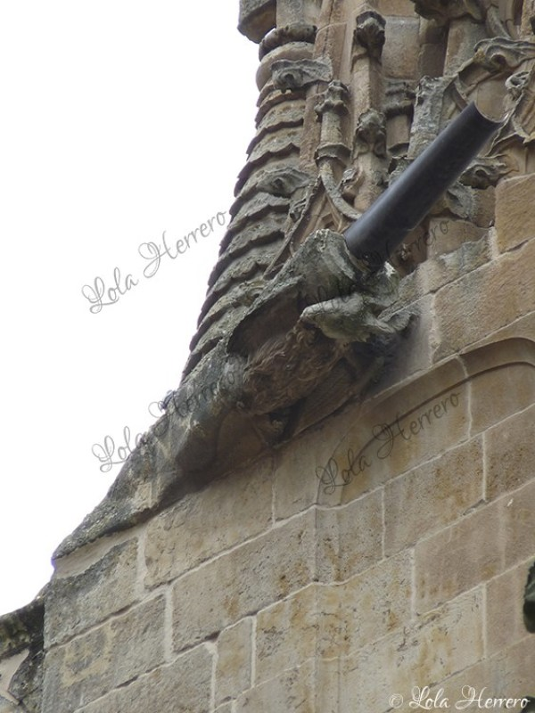 Gárgola Catedral Salamanca (365)