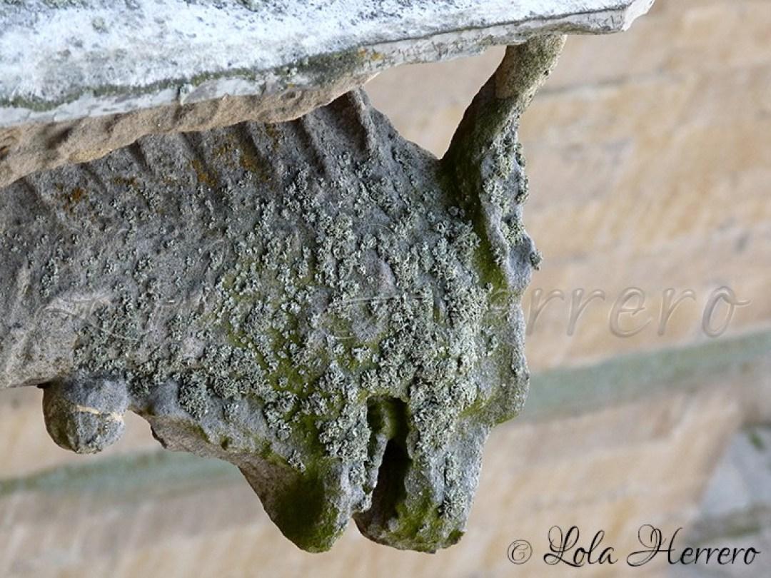 Gárgola Catedral Salamanca 210