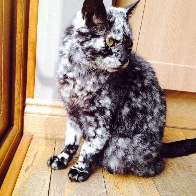 Бородавки  причины и способы лечения у кошек